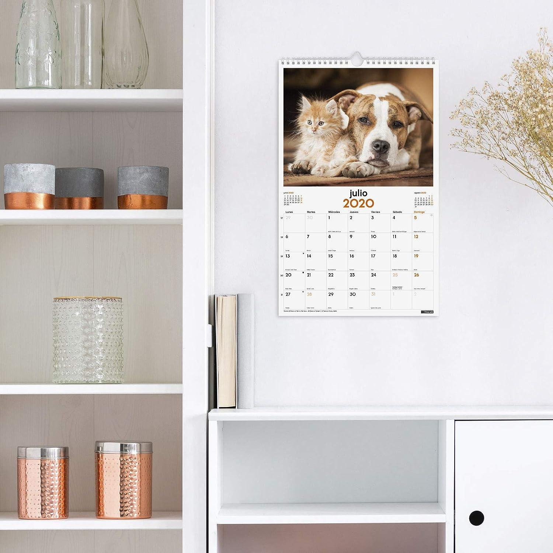 Finocam Calendario de pared 2020 Im/ágenes Espiral 25x40 Perros y Gatos espa/ñol