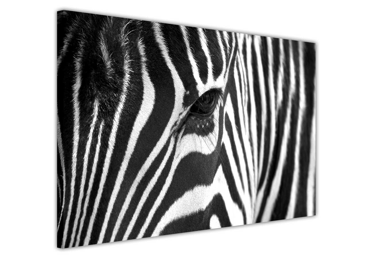Black and white canvas wall art prints african zebra pictures room decoration animal love print picture home art nature photos amazon co uk kitchen home