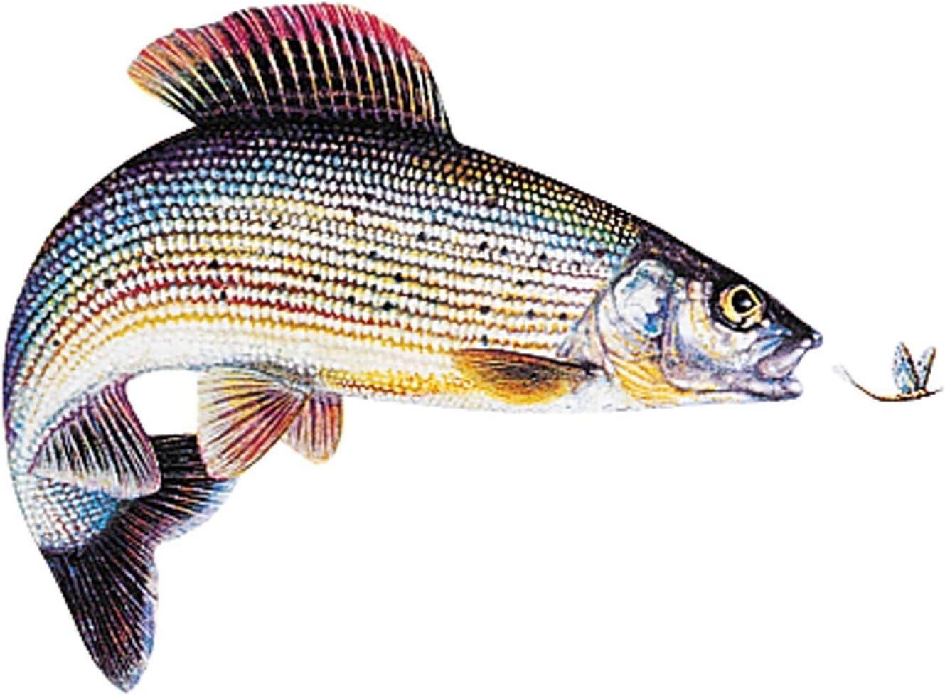Jenzi angeln Fisch Aufkleber ca.15cm Regenbogenforelle