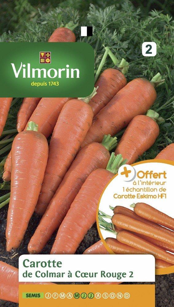 Echantillon Carotte Eskimo Vilmorin 3175742 Pack de Graines Carotte de Colmar à Cœur Rouge 2