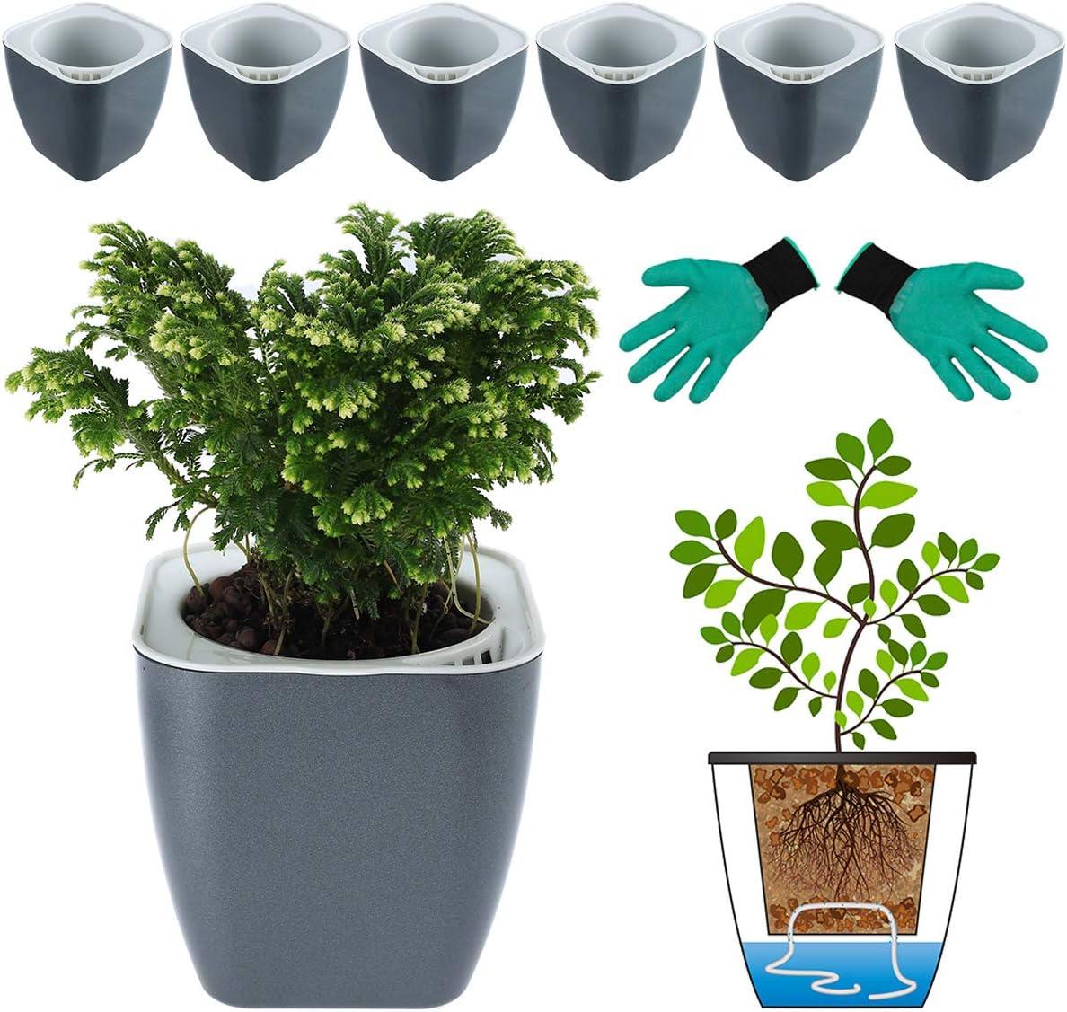 Watering Planter Plastic Clear Self Watering Flower Pot Water Storage Basin @