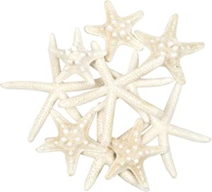 Jangostor 10 PCS Starfish 2-6 Inch Mixed Ocean Beach Starfish-Natural Colorful Seashells Starfish Perfect for Wedding Decor Beach Theme Party, Home Decorations,DIY Crafts, Fish Tank