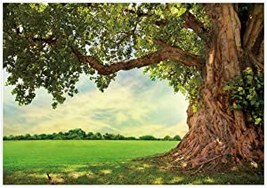 Allenjoy Nature Spring Backdrop Rural Aged Tree Sunshine Sky Cloud Grass Field Outdoor Kids Wedding Birthday Party Photoshoot Decoration Banner Photography Background Scenery 7x5ft Photo Booth Props