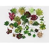 2 Pcs-Plastic Different Mini Succulents, Artificial Cactus Plant
