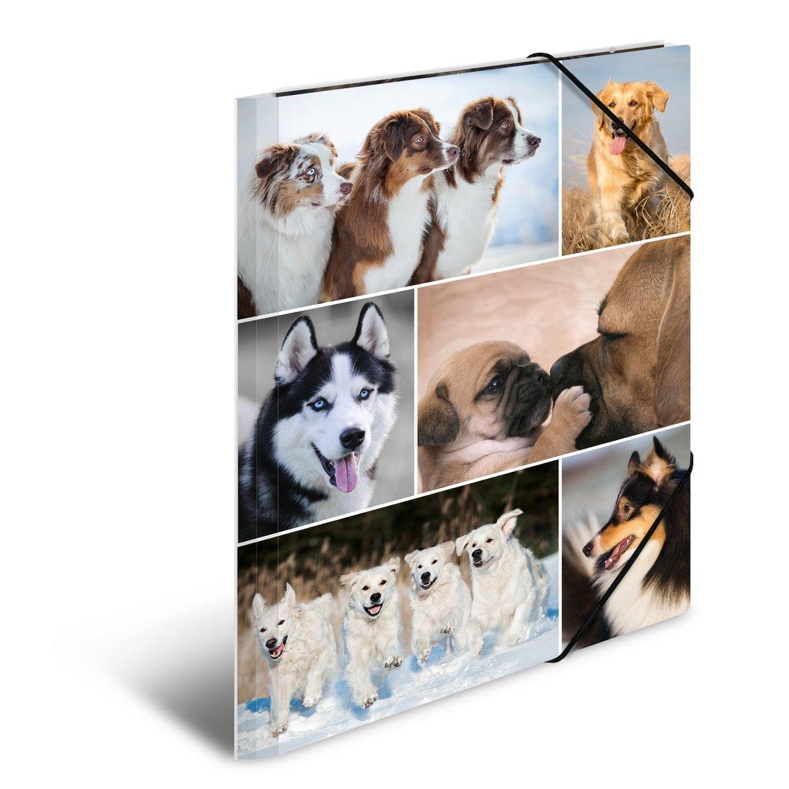 motivo: cane con con elastici in gomma 1/pezzi serie Animali HERMA 19211/ /Cartellina DIN A4/Cartoncino