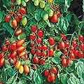 Park Seed Juliet Tomato Seeds