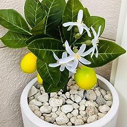 Amazon 造花グリーン 人工観葉植物 フェイクグリーン 24本入り Xiaz 造花藤 緑 葉 壁掛け 吊りのインテリア飾り人工植物 枯れないグリーン アイビー 人工観葉植物 オンライン通販