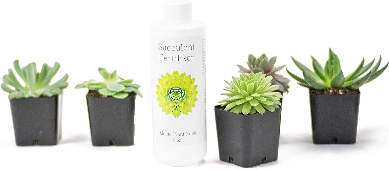 Amazon Com 5 Succulent Plants And Succulent Fertilizer Combo