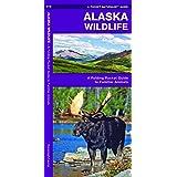 Alaska Wildlife: A Folding Pocket Guide to Familiar Species (A Pocket Naturalist Guide)