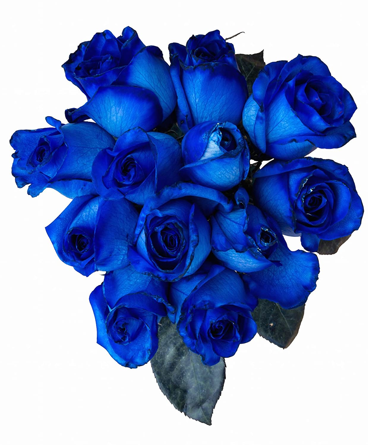 Amazon 24 Stems Fresh Cut Blue Roses From Flower Explosion