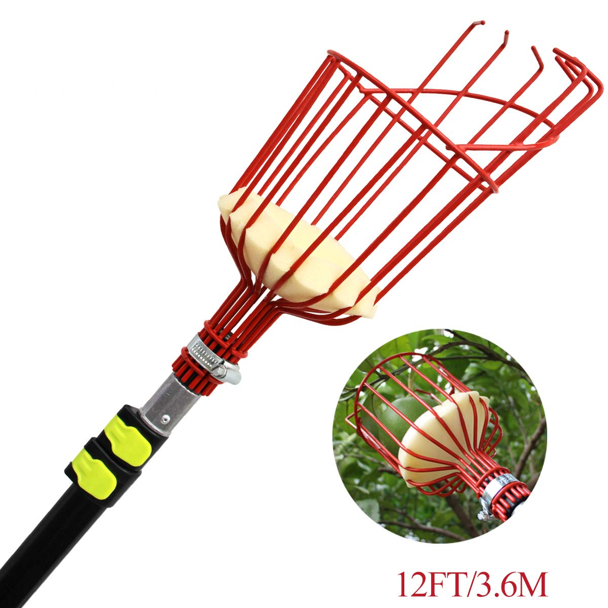 Mesa Fruit Tree Picker with telescoping Pole and Twist-on Basket, Red Head Lightweight Aluminum Extension Picking Tool 13ft for Getting Apples Oranges and All Fruits