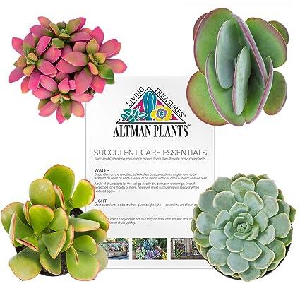 Amazon Com Altman Plants Diy Succulent Garden Kit For