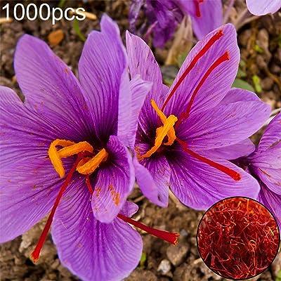 everd1487HH 1000Pcs Saffron Crocus Seeds Plantal Flower Garden Balcony Outdoor Bonsai Perfume Flower Perennial Plant- Saffron Crocus Seeds : Garden & Outdoor