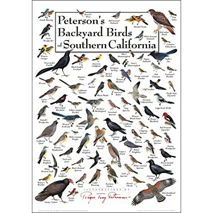 Earth Sky U0026 Water Poster   Petersonu0027s Backyard Birds Of Southern California
