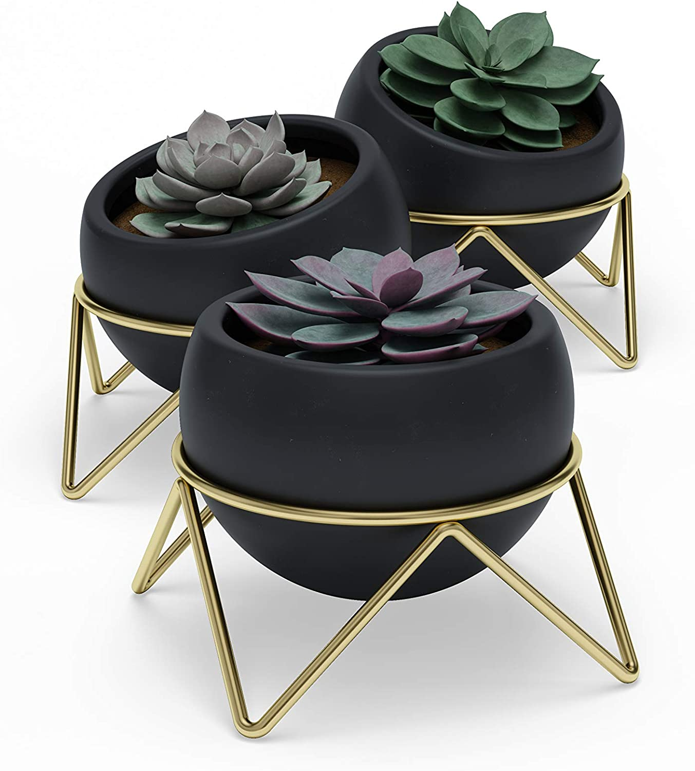 Umbra Potsy, Set of 3 Desktop Planters for Succulents, Mini Cacti, Faux Plants and More, Black/Brass