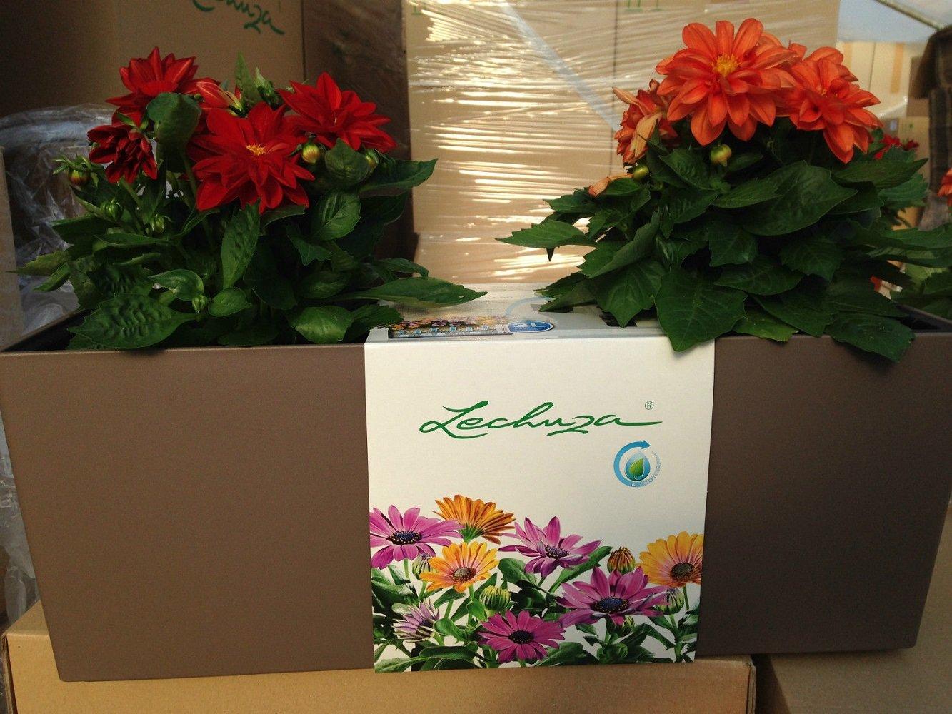 4 x Lechuza Balconera 50 Color Muskat Komplettset Balkonkasten Blumenkasten Neu