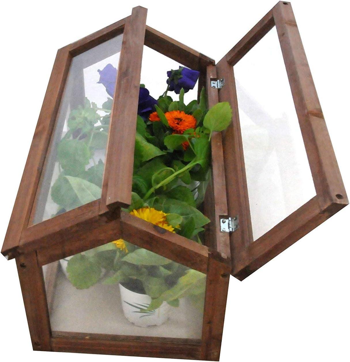 Invernadero Gardiun Narciso 51x31x30, 5 cm: Amazon.es: Jardín