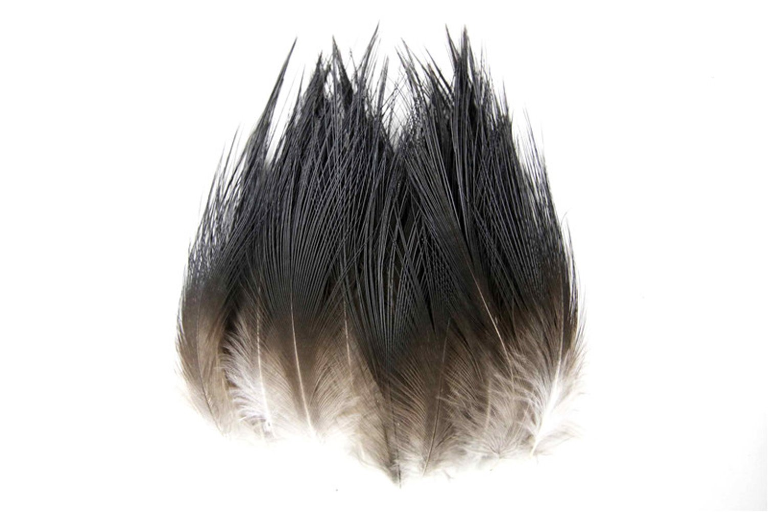 Insomnia Star 100 pcs Black Rare Beautiful Natural Pheasant Feather 5-10cm/2-4inch