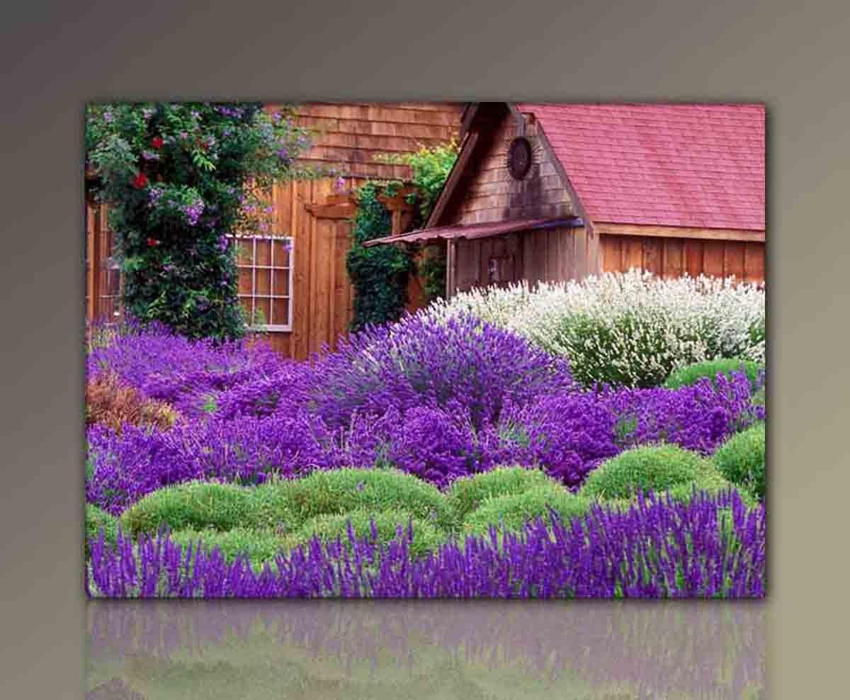 Wandbild xxl günstig & modern (Wonderful_Lavender-80x110cm) Lavendel ...