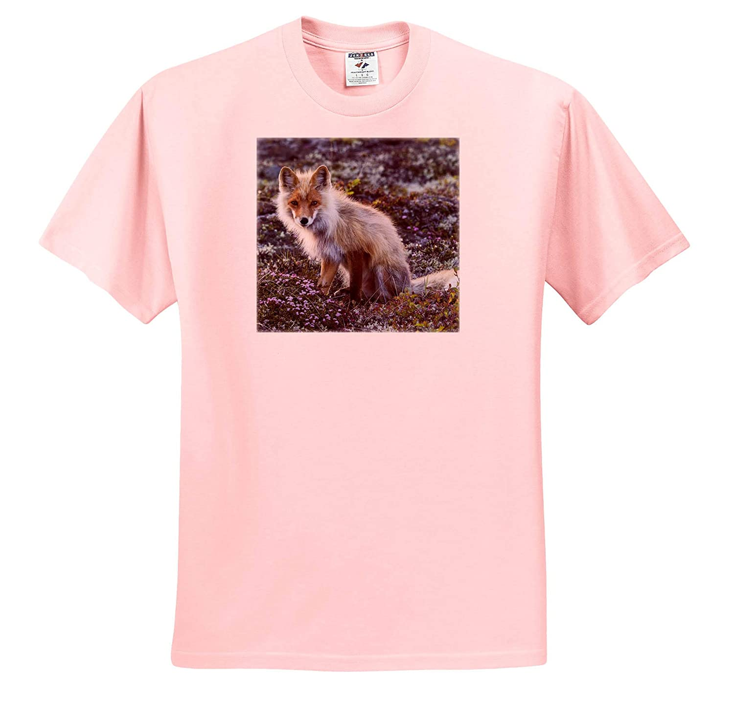 3dRose Danita Delimont Adult T-Shirt XL Red Fox ts/_314508 Tundra in Bloom Foxes