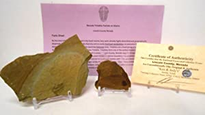 Genuine Lincoln County Nevada Trilobite Partials on Matrix (2) with FREE Acrylic Display Stands, Fact Sheet & COA Bundle.
