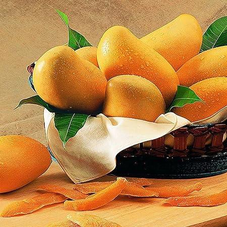 Ncient 2 Semillas de Arbol de Mango Orgánico Semillas de Frutas Raras Plantas Flores Bonsai Semillas Fragantes para Jardín Balcon Interior y ...