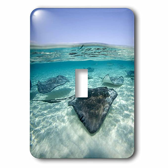 3dRose lsp_73261_1 Cayman Islands, Southern Stingray in Caribbean Sea-Ca42 Pso0044 Paul Souders Light Switch Cover - - Amazon.com