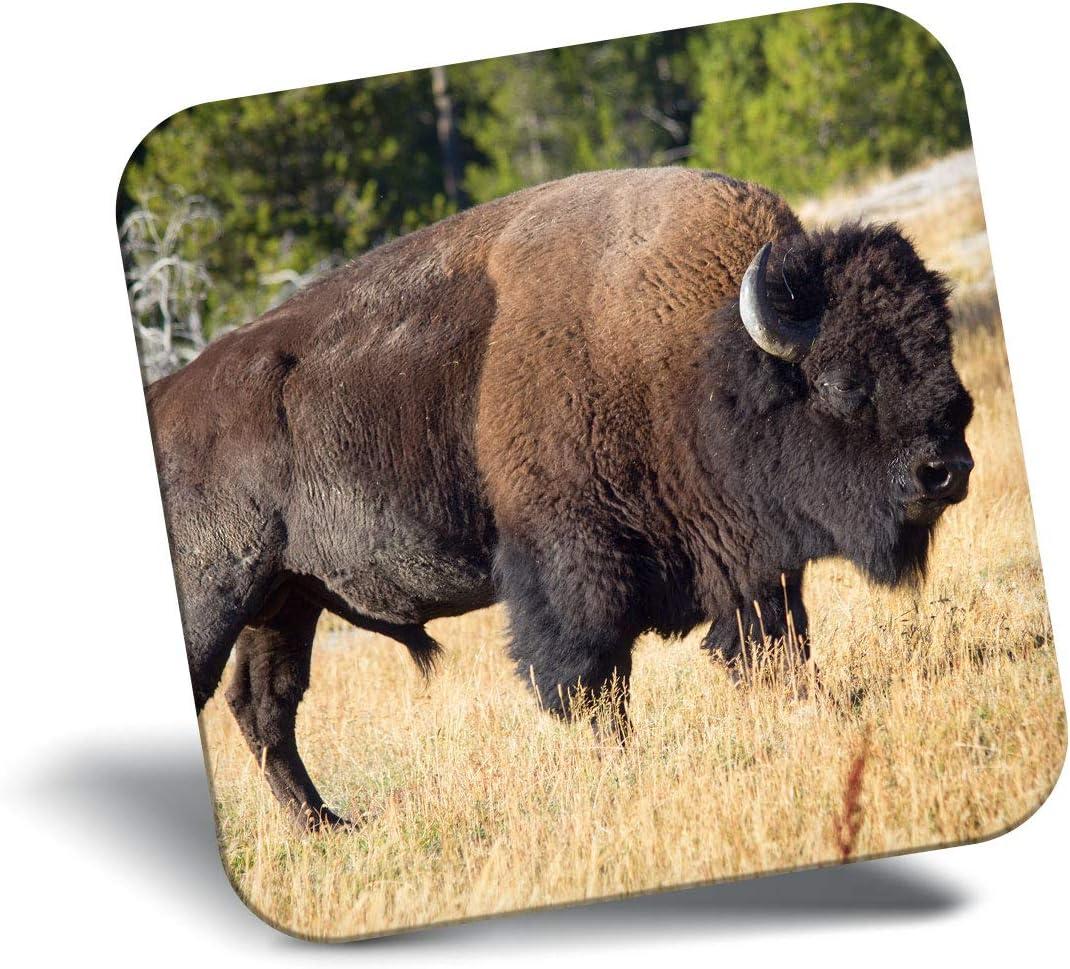 Destination Vinyl ltd Awesome Fridge Magnet - Bison Yellowstone National Park 21226