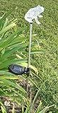 Decorative Frog Solar Powered Garden Yard Stake Light, Set of 2
