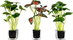 yoerm Set of 3 Small Fake Plants Potted w/Glass Pots, Artificial Bonsai for Desktop Decor