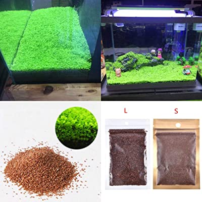 hudiemm0B Aquarium Plant Seeds, Fish Tank Aquarium Plant Seeds Aquatics Green Leaves Carpet Water Grass Decor: Sports & Outdoors
