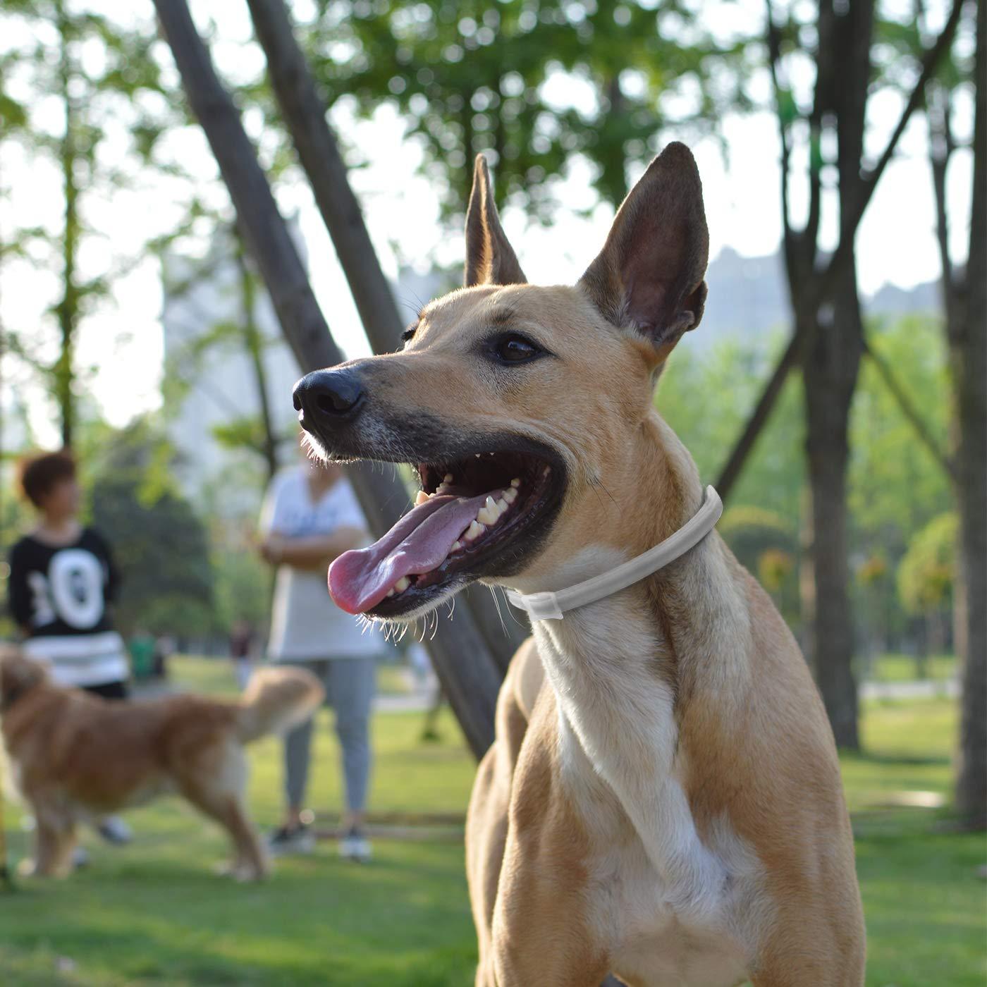 MagicHome Collar Antiparasitario para Perros contra Pulgas, Garrapatas y Mosquitos para Perros Adultos: Amazon.es: Bricolaje y herramientas