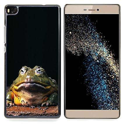 Amazon.com: Ihec Tech Funny Hypno Toad Big Frog / Hard ...