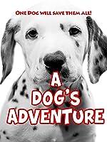 A Dog's Adventure