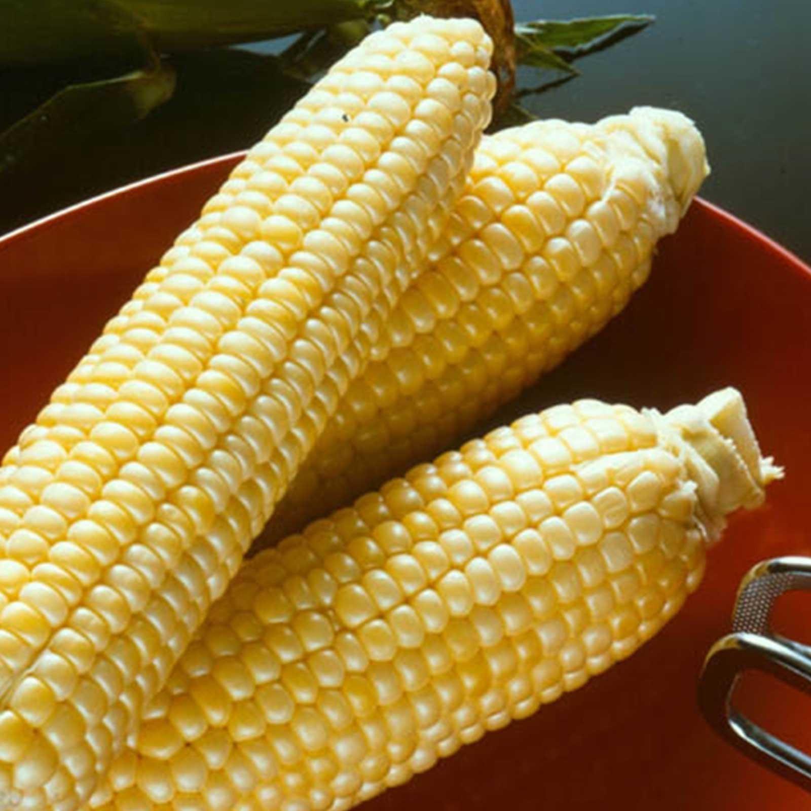 Sugar Buns Hybrid Corn Garden Seed (Treated) - 5 Lb - Non-GMO, Sugary Enhanced (SE), Vegetable Gardening Seeds - Yellow Sweet Corn