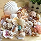 Tuliptown Various Sizes Mixed Natural Beach Seashells Craft Decorations for Wedding Garden Aquarium - Pack of 3.5oz Seashells