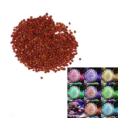 HOTUEEN 100pcs/ Bag Mixed Fluorescent Water Grass Seeds Aquarium Decor Herb Plants Aquatic Plants : Garden & Outdoor