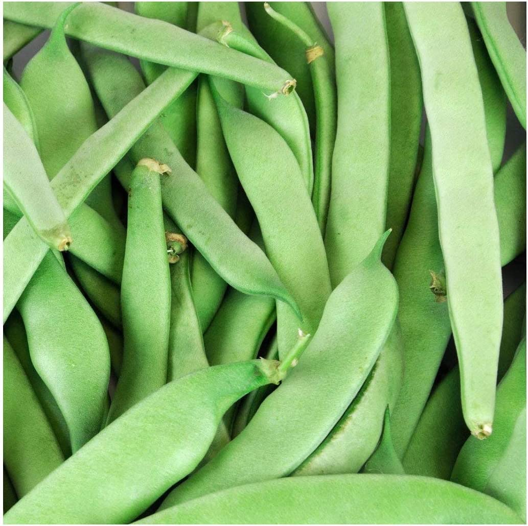 David's Garden Seeds Bean Bush Roma II 1346 (Green) 100 Non-GMO, Heirloom Seeds