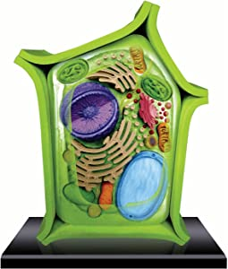 Beautifully Detailed Plant Cell Anatomy Model - 24 Detachable Parts! (Age 8+)