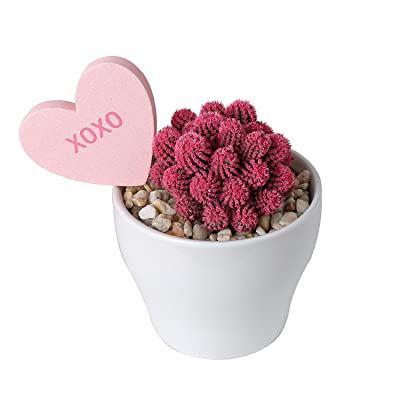 Costa Farms Desert Gems Cactus Live Indoor Plant, Mother's Day Gift in Gloss White Ceramic Pot, Heart Shape Secret Message (I love you, XOXO, Kisses), Pink: Garden & Outdoor