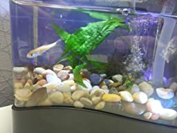 even though it wasnt his original calling in life in another fishs belly by buying this aquarium you too could change a fishs life forever office desk aquarium