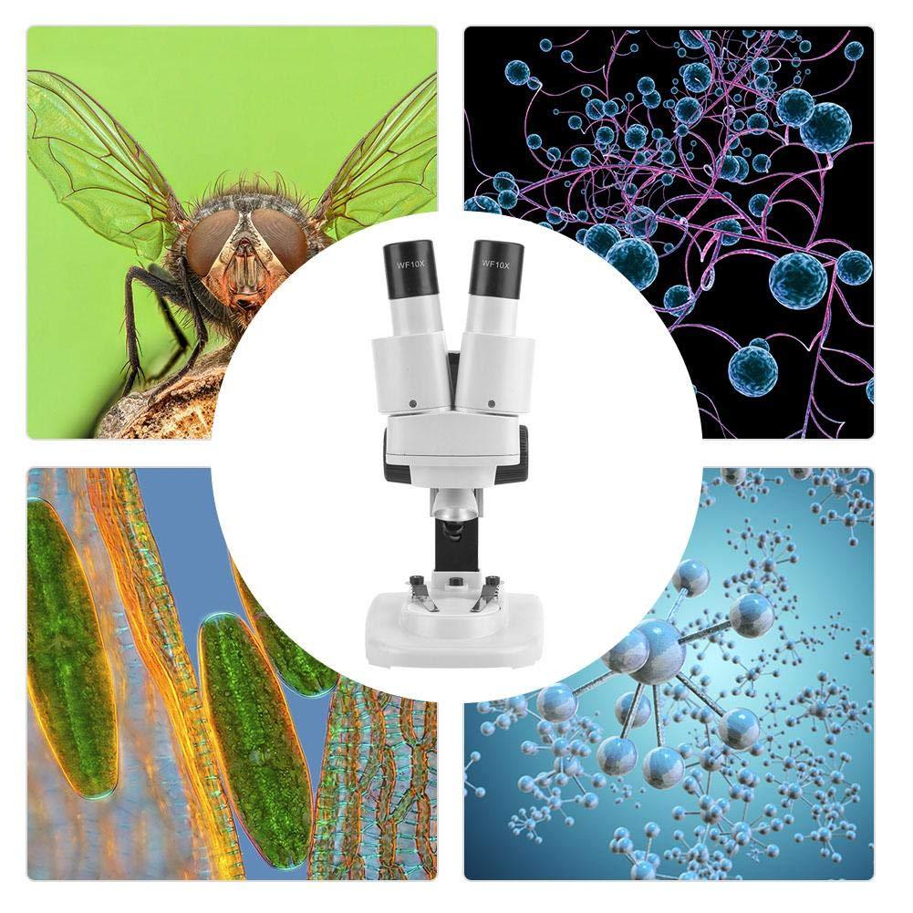 Schools Use Binocular Microscope Sturdy 20x Biomicroscope Educational Tool for Laboratories Clinical Examinations