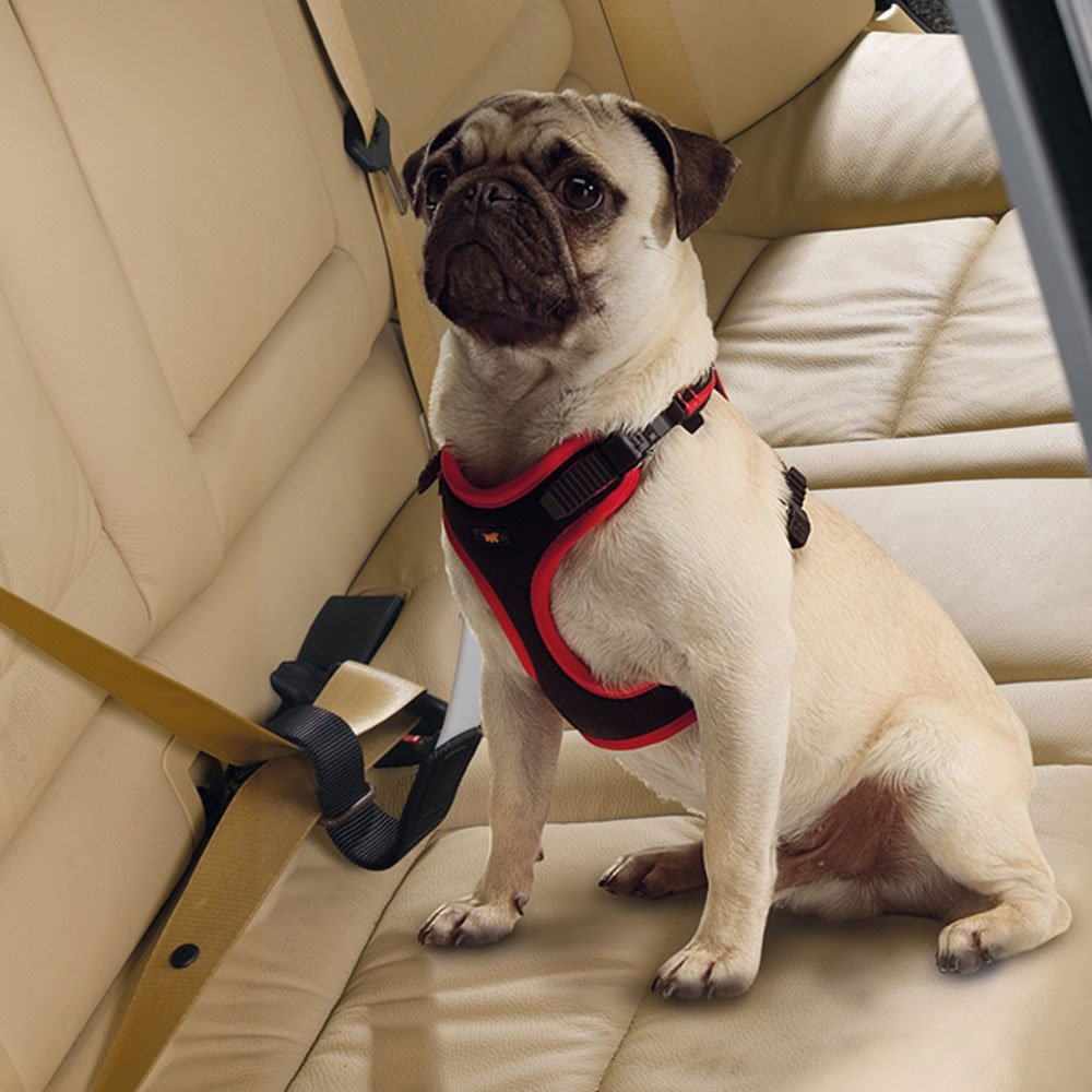 40/ mm x 50/ cm Nero Ferplast Dog Travel Belt Dog Cintura di Sicurezza