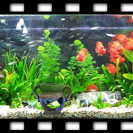 Efanr pequeñas Simulación Resina musgo jarrón Acuario Paisaje Decoración poliresina Fish Tank Decoración Adornos para peces camarones nido lanzadera Visor ...