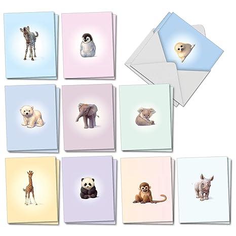 Amazon.com: Zoo Babies: 20 tarjetas de felicitación surtidas ...