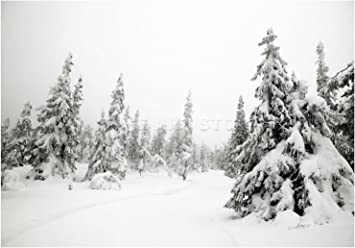 MPLANDSCAPE WINTER SCENE SNOW FOREST TREES Poster Picture Photograph Canvas art