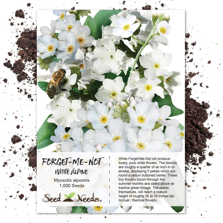 Amazoncom Seed Needs White Forget Me Not Myosotis Alpestris 1