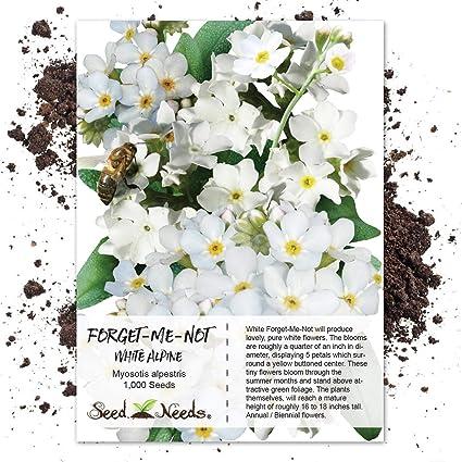 Amazon Seed Needs White Forget Me Not Myosotis Alpestris 1