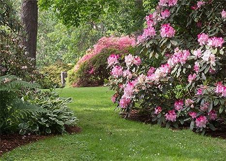 YongFoto 1,5x1m Fondo jardín primavera flores frescas árboles selva fondos naturales para fotografía verde pastizal al aire libre fondo fotos para Niños adultos retratos accesorios estudio: Amazon.es: Electrónica
