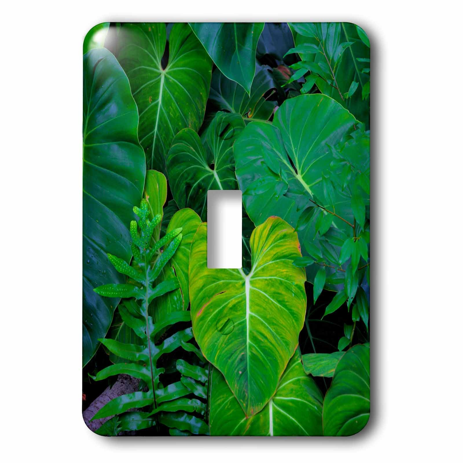3dRose LSP_278963_1 USA, Hawaii, Oahu, Tropical Green Philodendrons Toggle Switch, Multicolor